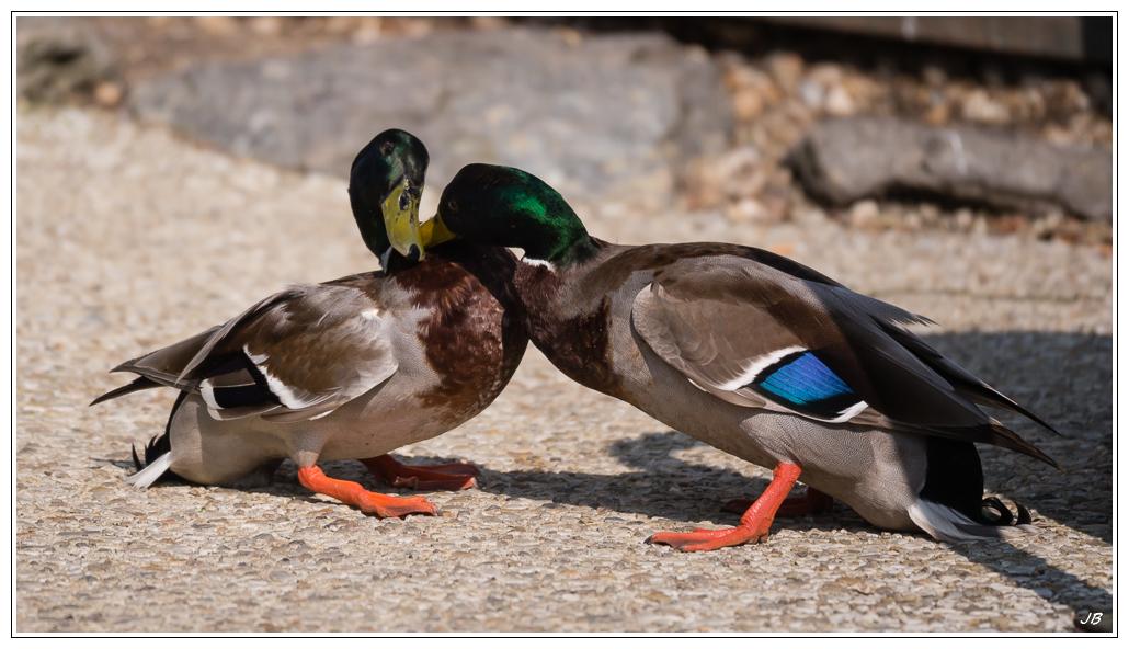 Zoo de Beauval : les oiseaux 862833LR53P3130295