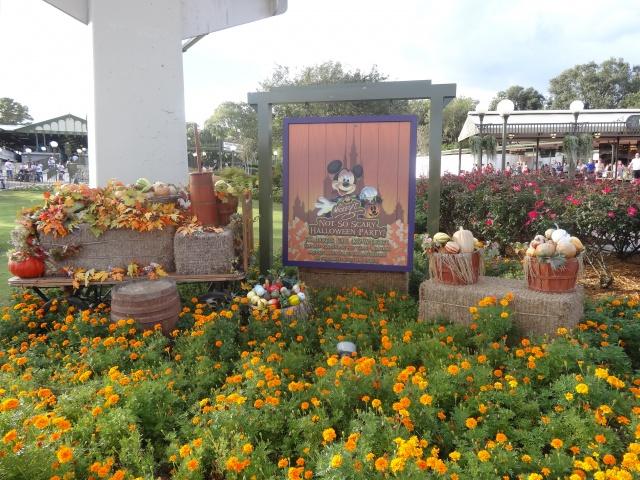 First Visit WDW/Miami/Key West halloween 2013 - Page 6 866715DSC03418