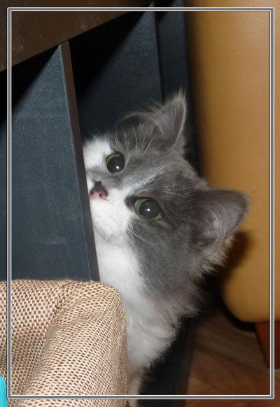 GRACE petite chatonne poil mi-long de 6 mois  - Page 3 866958P1120217