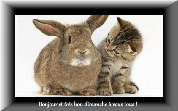 Bonjour bonsoir,...blabla Novembre 2013   - Page 4 867472di270110