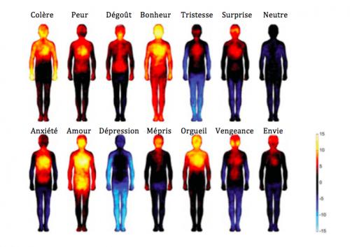 Les effets des émotions et des pensées négatives sur notre corps 867779emotionsdanslecorps500x354