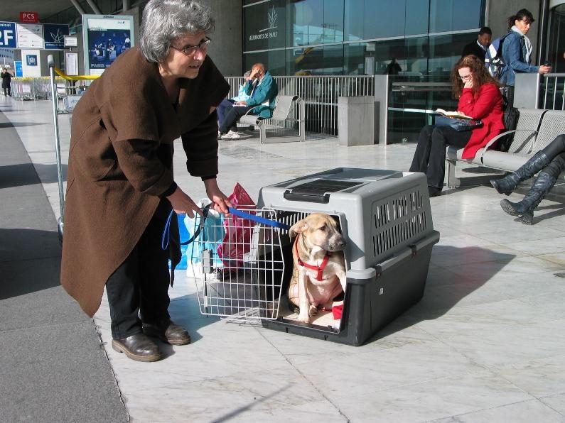 Lila, adorable chienne croisée, née en octobre 2011 871060IMG8048
