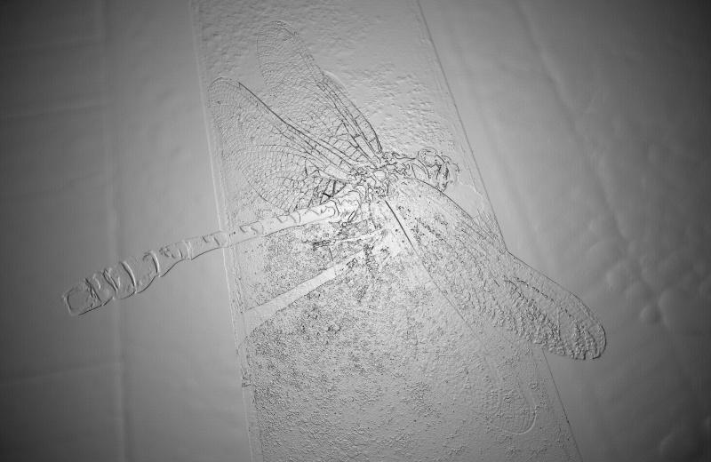 Jeux des insectes fossilisés 2 874745DSCN2604