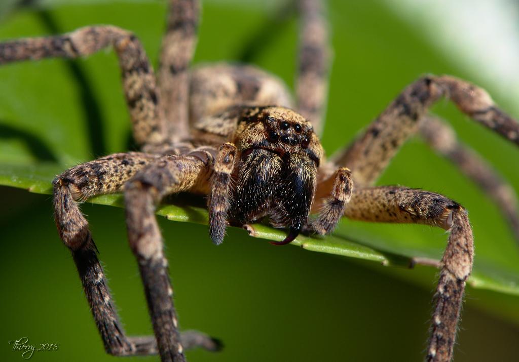 (FIL OUVERT à tous) vous aimez les araignées? - Page 2 876519DSC0714