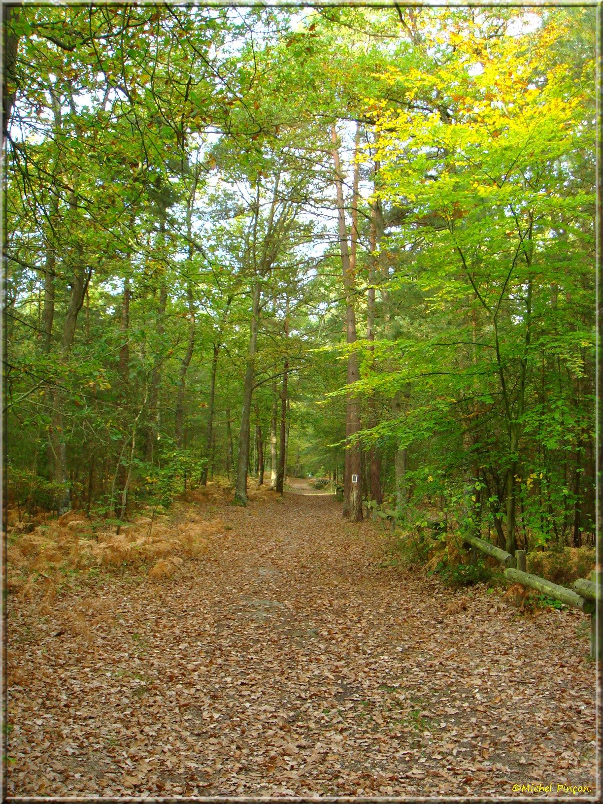 [fil ouvert] la forêt dans tous ses états - Page 15 876900DSC013983