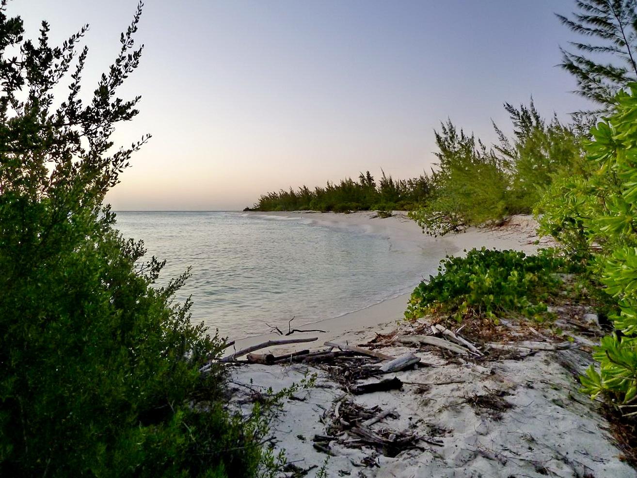 [Campagne] Iles éparses du canal du Mozambique - Page 13 877549P1060542