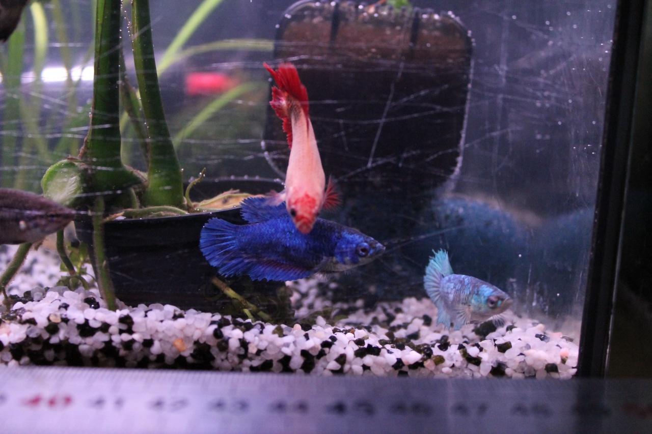 aquarium des femelles déco nature 881488aquarium003
