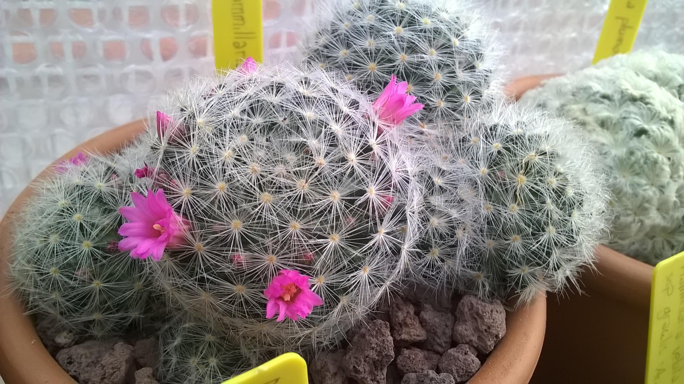 Les cactus de Digitaline 882267WP20160109163315Pro