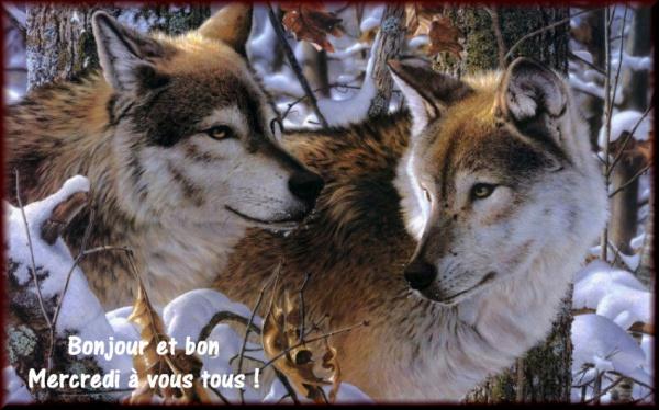 Bonjour bonsoir,...blabla Decembre 2013 - Page 2 885769ME270320134