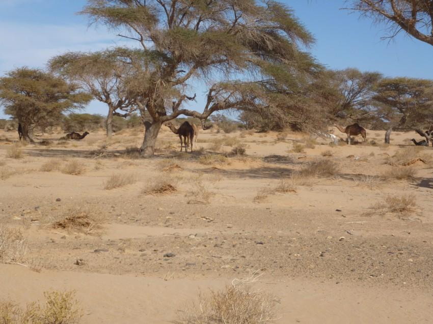 Le Grand Sud du Maroc - II 894697069