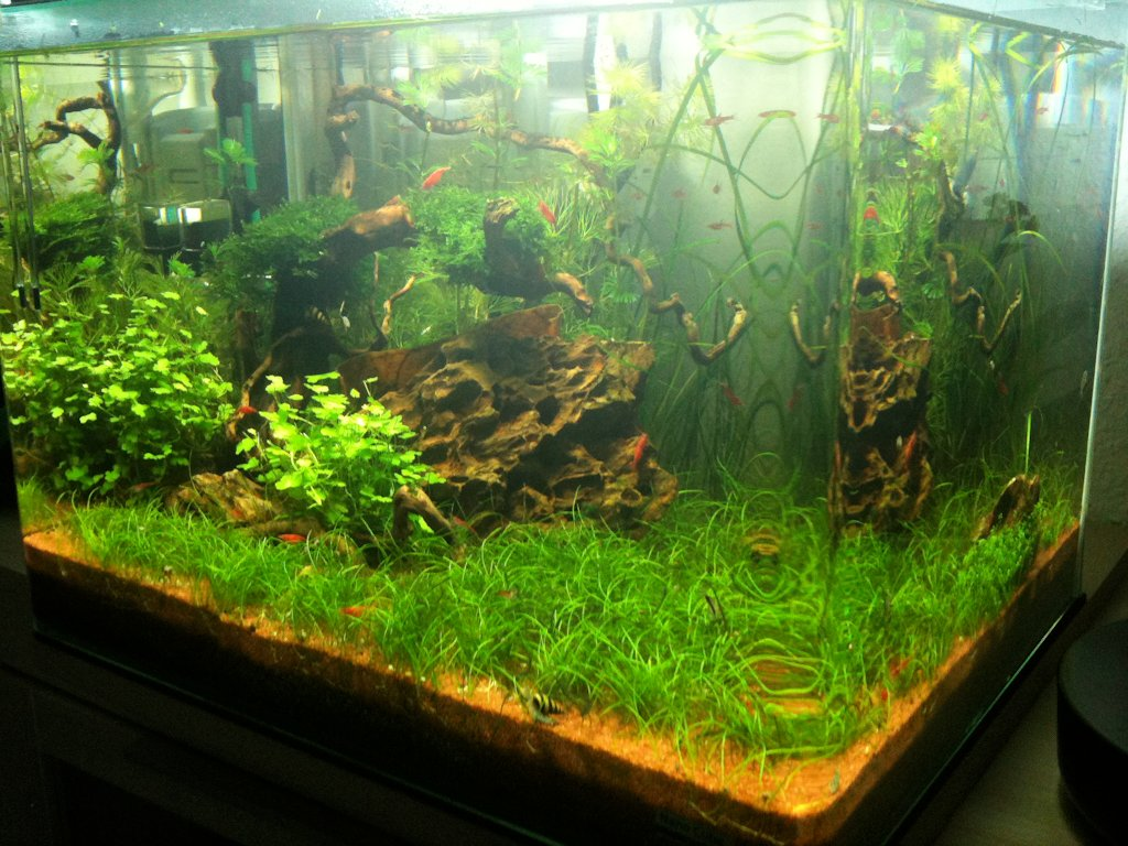 Mon Scaper's Tank 50L Aquascaping - Page 2 896755IMG0456