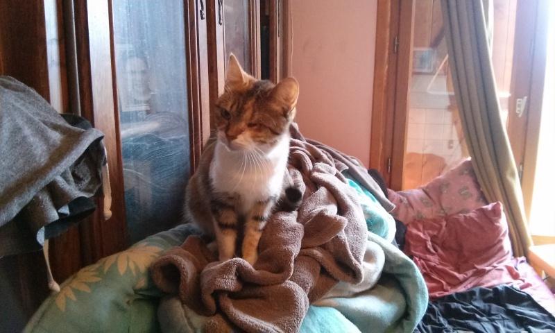 DUCHESSE - chatte femelle, née 2011/2012, borgne - (PASCANI) - adoptée par Chantal Pascal (dpt 63) - Page 4 8984511466
