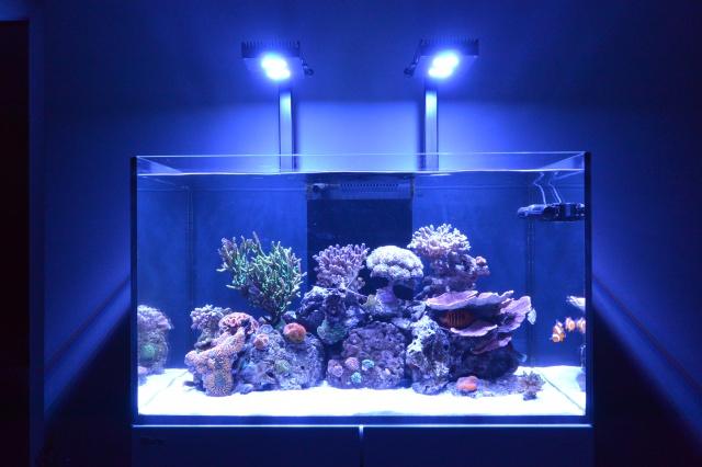 Re: Redg's paradise reef 900622DSC2978