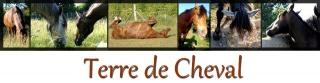 Tourisme Equestre Loire Atlantique 903830banniere1
