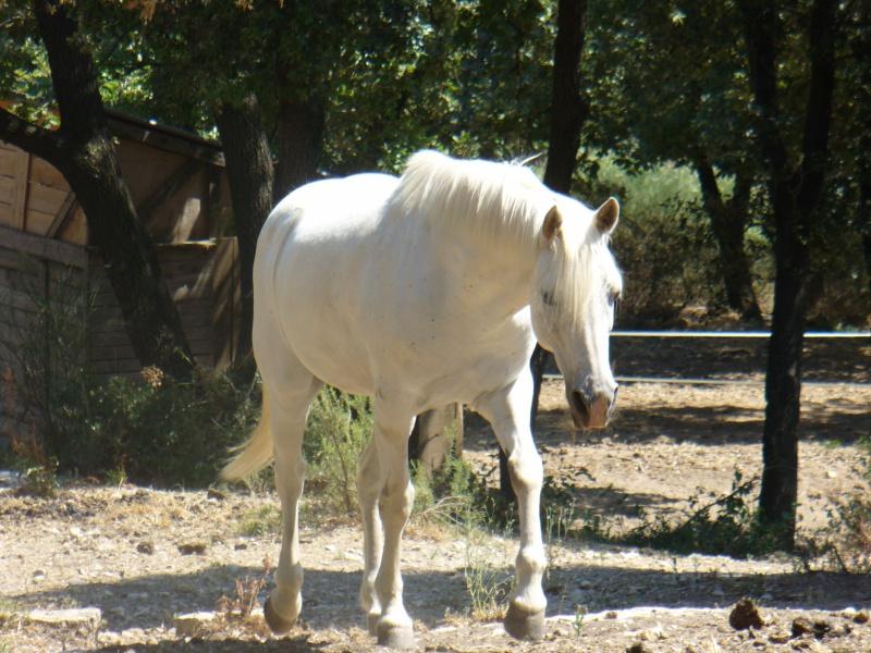Une tumeur à la ganache a emporté mon cheval Banco. Qui a déjà vu ça ? 906186P1000603