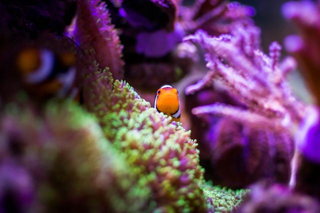 Mon premier aquarium eau de mer - Page 6 906862DSC0440