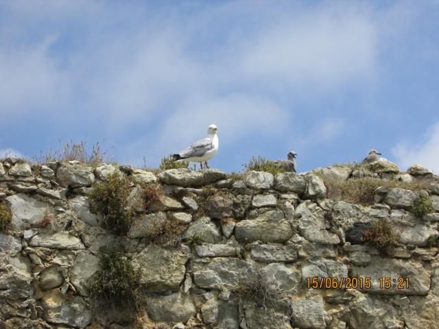 Oiseaux vus au Portugal 908011f2655835