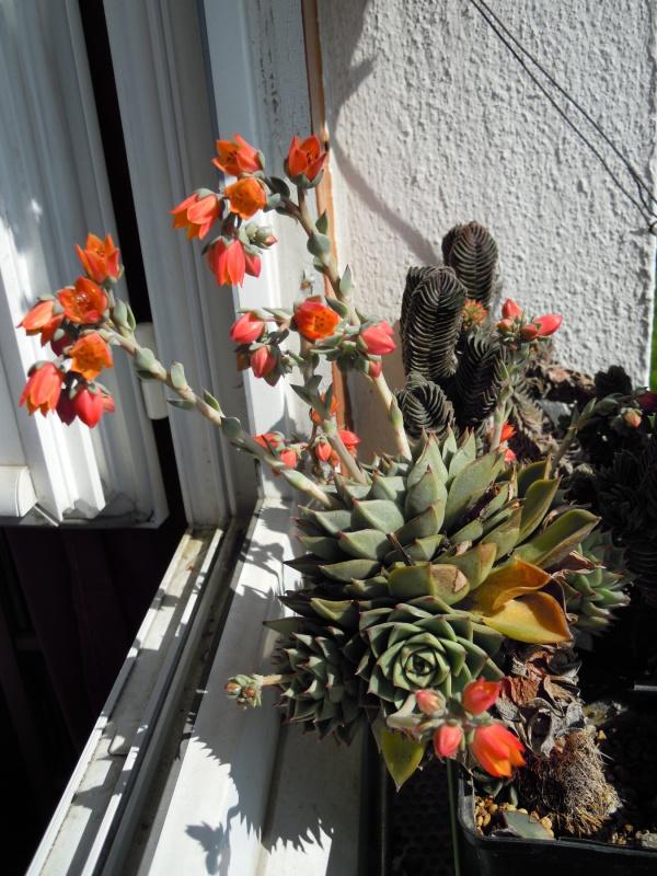 fraicheur et rayon de soleil sur les rebords de fenêtres... 908585fabiola32