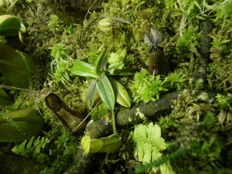 Mon terrarium highland 911237IMGP1838