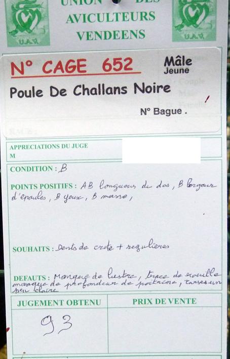 poule - Poule de Challans - standard 914645P1120305