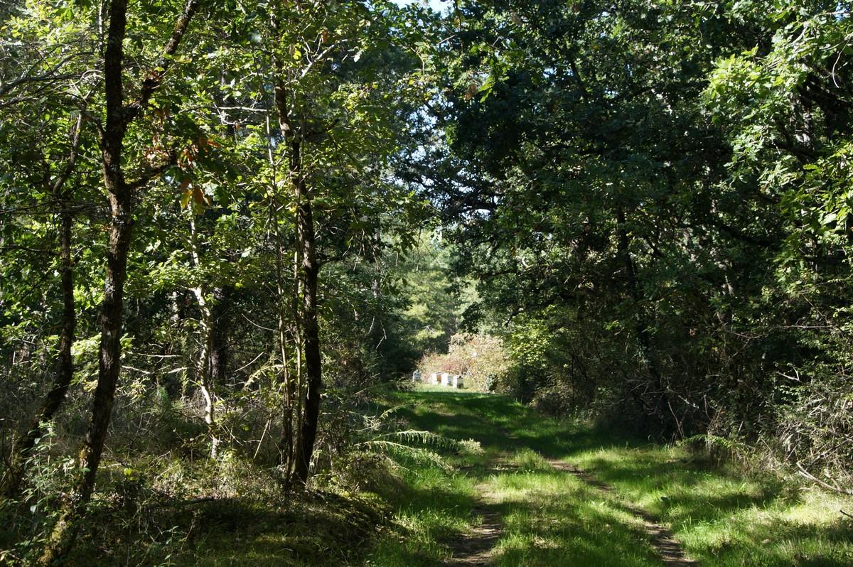 [fil ouvert] la forêt dans tous ses états - Page 15 917883DSC07737