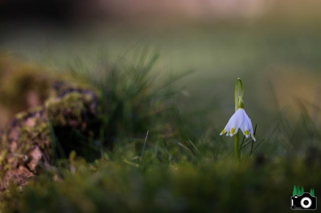 Je n'aime que toi petite fleur des champs... 918451IMG0045f12
