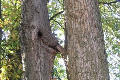 Comment se reproduisent les arbres? (classé X) 920262ATT00002