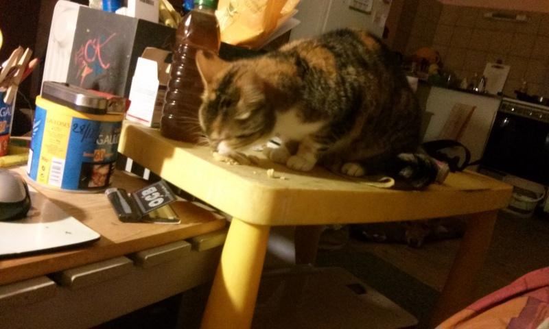 DUCHESSE - chatte femelle, née 2011/2012, borgne - (PASCANI) - adoptée par Chantal Pascal (dpt 63) - Page 4 924645104