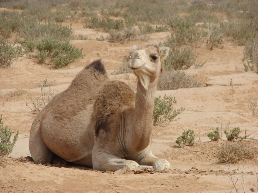 Le Grand Sud du Maroc - II 926930041