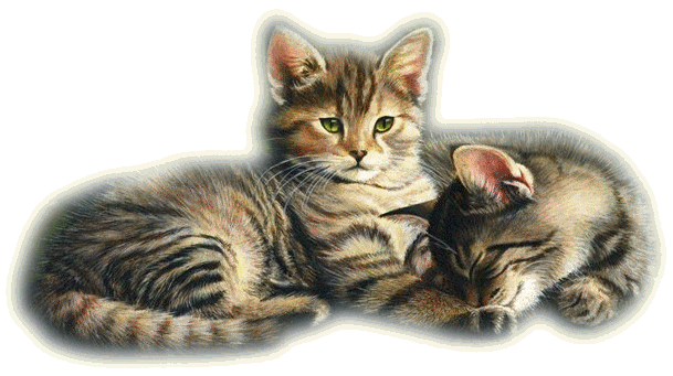 Mes tubages Chats 927397TubMel28