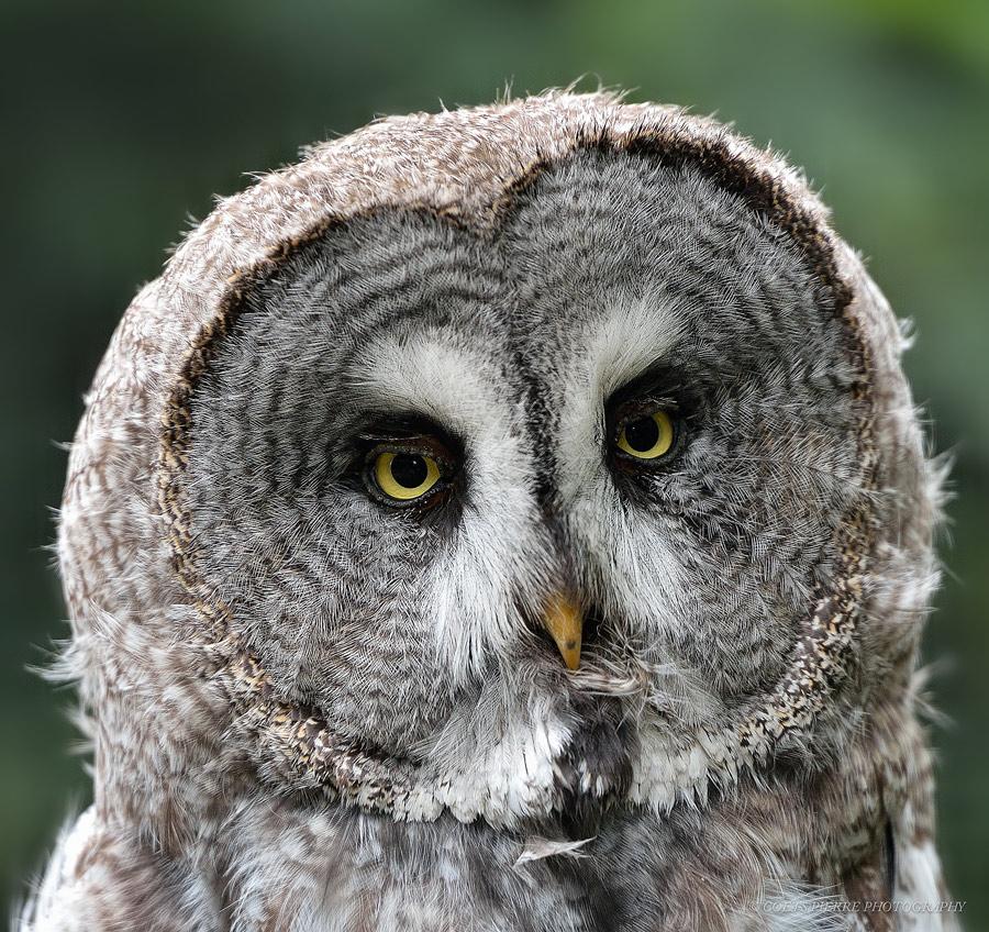 Sortie au Zoo d'Olmen (à côté de Hasselt) le samedi 14 juillet : Les photos - Page 2 927731D4D2836