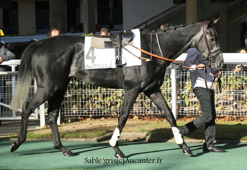 Photos Auteuil 15-10-2016 9282765J6A8777