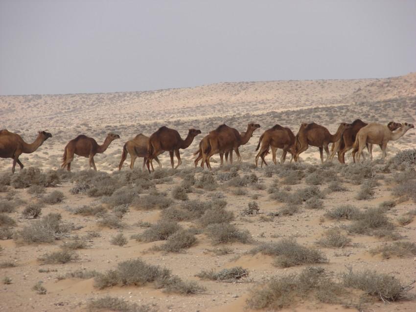 retour Maroc octobre 2013 - Page 2 928425110