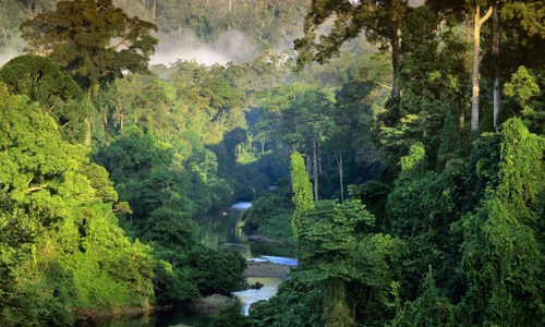 Grande Jungle