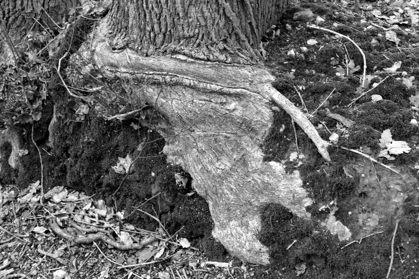 [fil ouvert] la forêt dans tous ses états - Page 17 931909013Copier