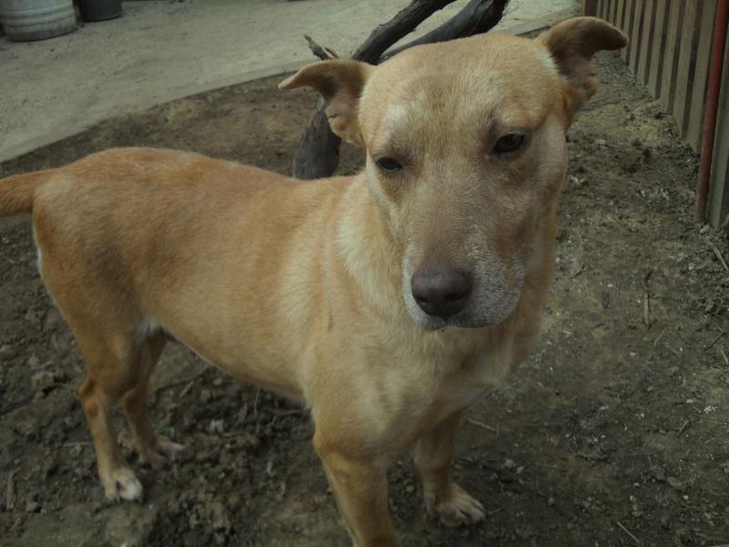 Tina, chienne sauvée de la rue, née en avril 2010  933105Tina13mars2015