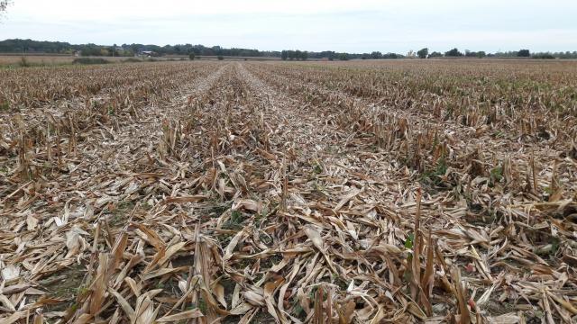 suivi des blés tendre 2017 - Page 3 935944Blmais20161016185524