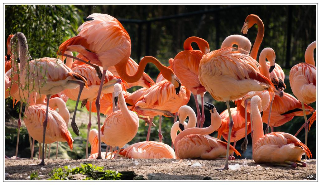 Zoo de Beauval : les oiseaux 938493LR53P1140245