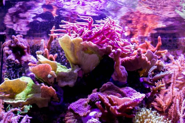 Mon premier aquarium eau de mer - Page 6 943709DSC0481