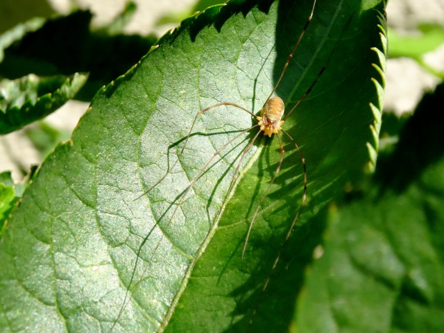 La maison des araignées 945641DSC02591