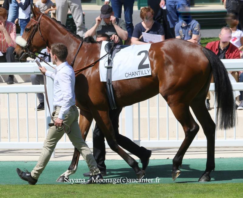 Photos Chantilly 6-05-2016 9498455J6A0941