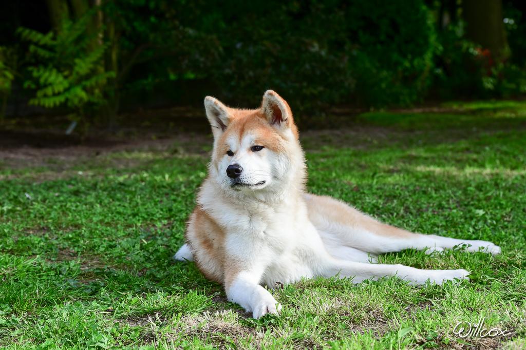 [fil ouvert] Les chiens, nos amis 955990CMA41901