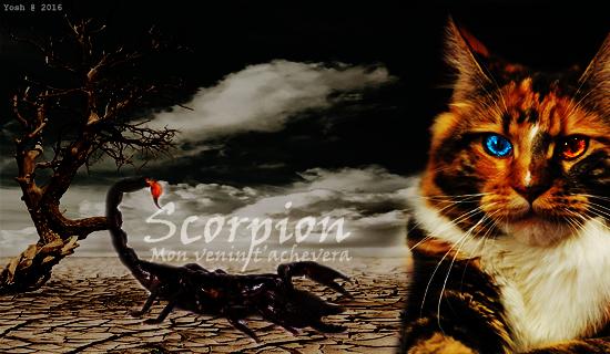 Cupidon ne s' trompe jamais Feat Venin du Scorpion 956911SarahmafamScorpion