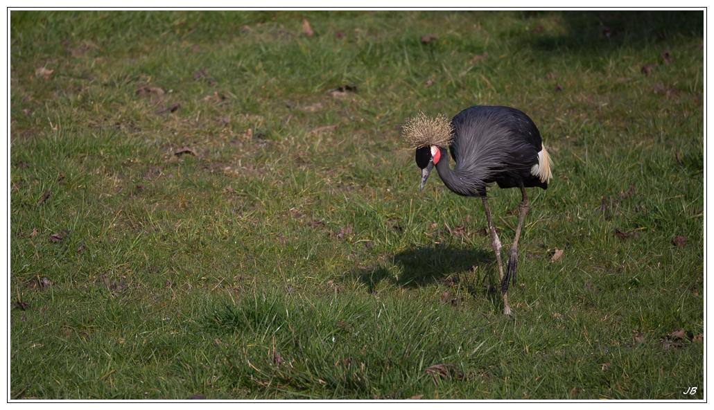 Zoo de Beauval : les oiseaux 958087LR53P3130161