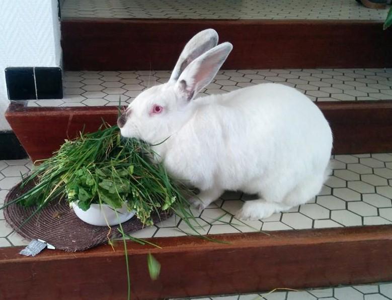 Association White Rabbit- Réhabilitation des lapins de laboratoire - Page 2 959116122433418897437977844271608354577256591248n