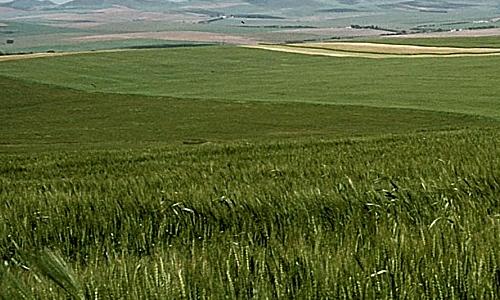 Prairie Abondante