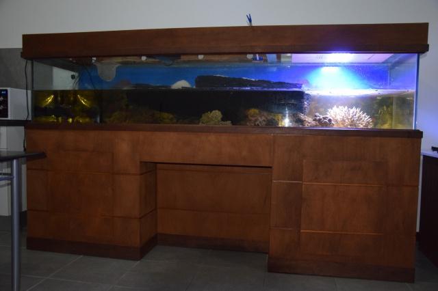 Le nouveau bac du Poissonpané : aquaterrarium de 900L / Nouvelle Calédonie 963244DSC0727