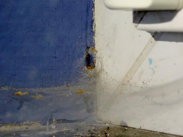 La maison des araignées 966502DSC02574