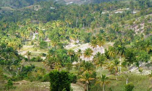 Vallée des Palmiers
