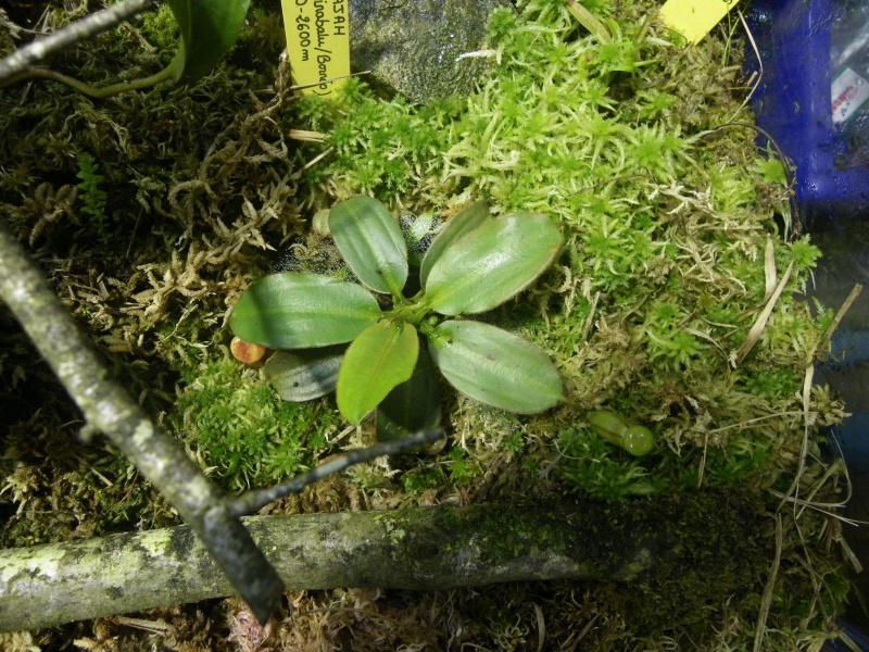 Mon terrarium highland 969129IMGP1835